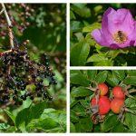 Mit Ayurveda durch den bunten Herbst