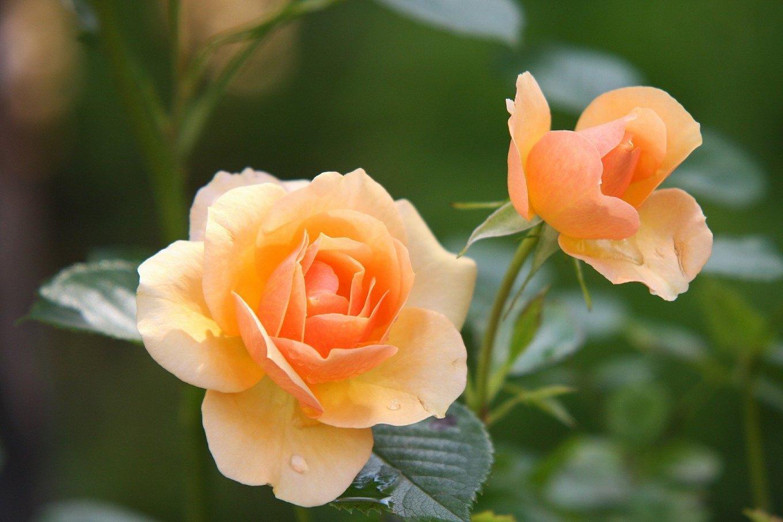 Glanz und natürliche Schönheit